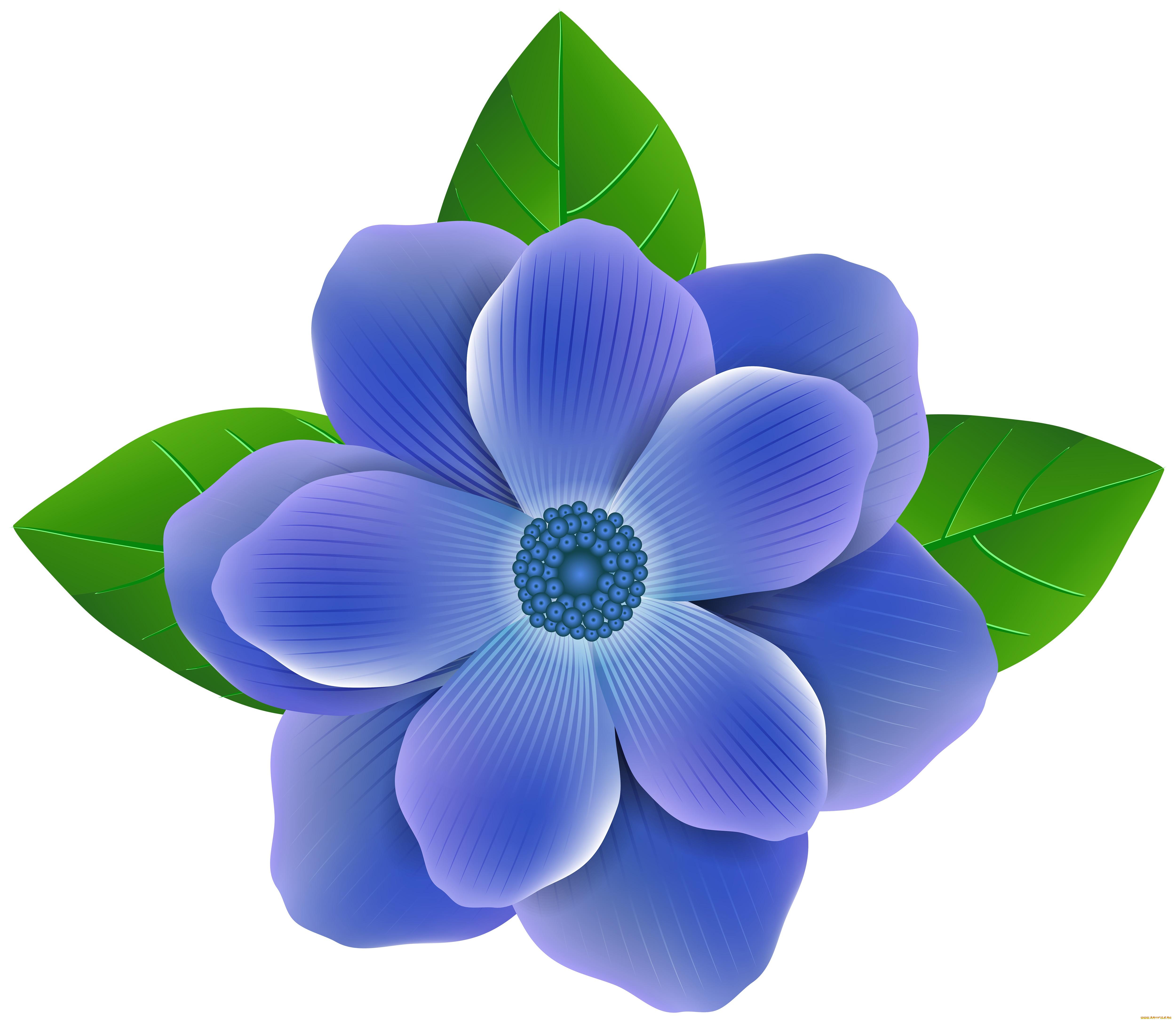 Красивые картинки цветов для детей